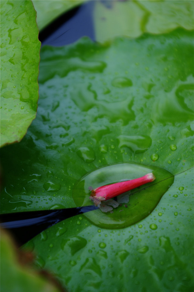 Choji 写真展「美御水 ~琉球からの言い伝え~」