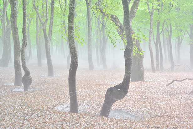 柴田祥『misty illusion / 青森市八甲田』