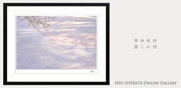 柴田祥 sho shibata online gallery island gallery