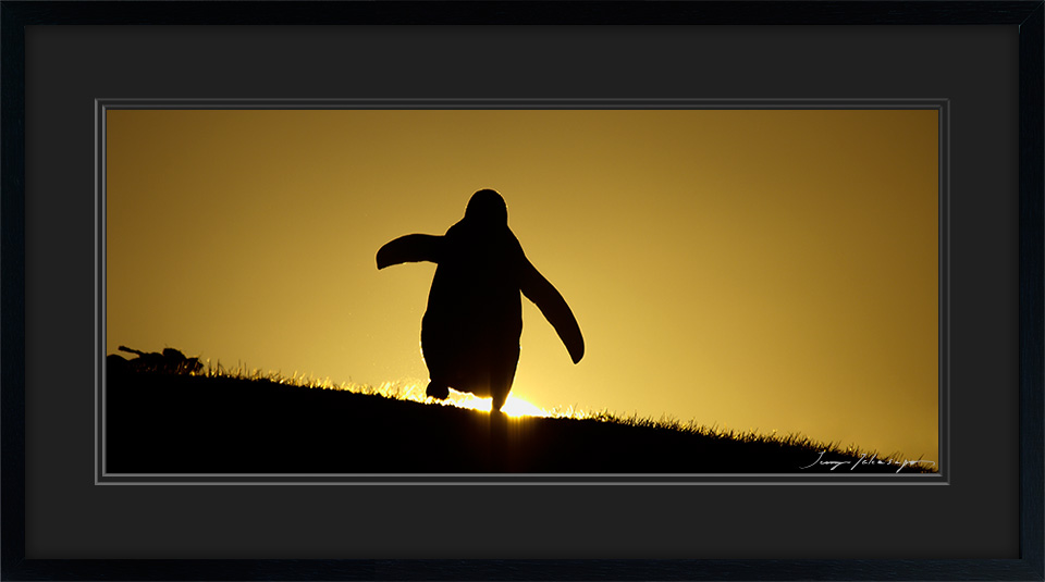 PENGUIN-IN-SUNSET