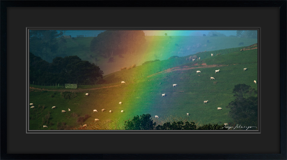 rainbowed-sheep